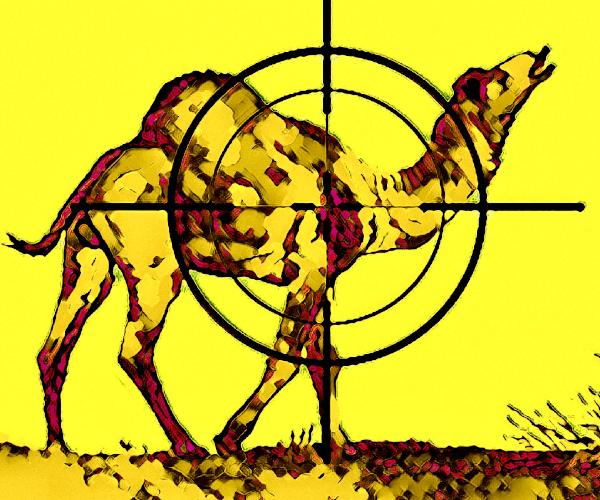 Australia cammelli